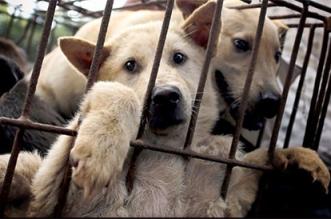 torture-chiens